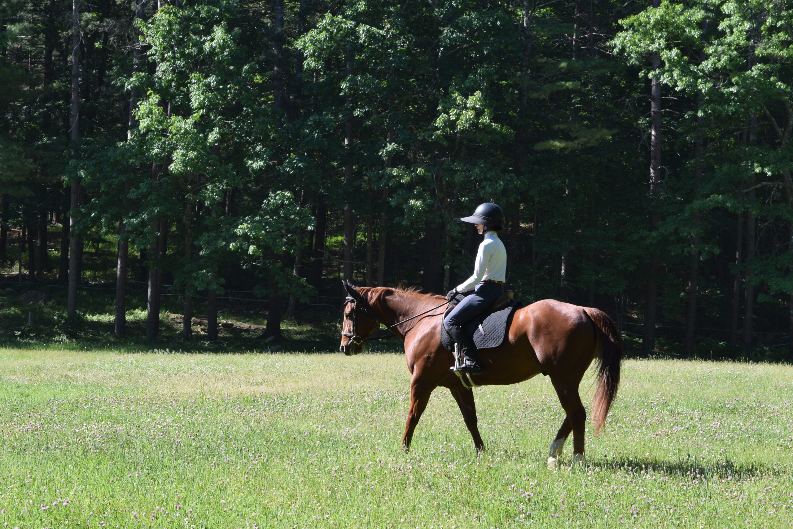 Summer in the Saddle at Windrush Farm 2