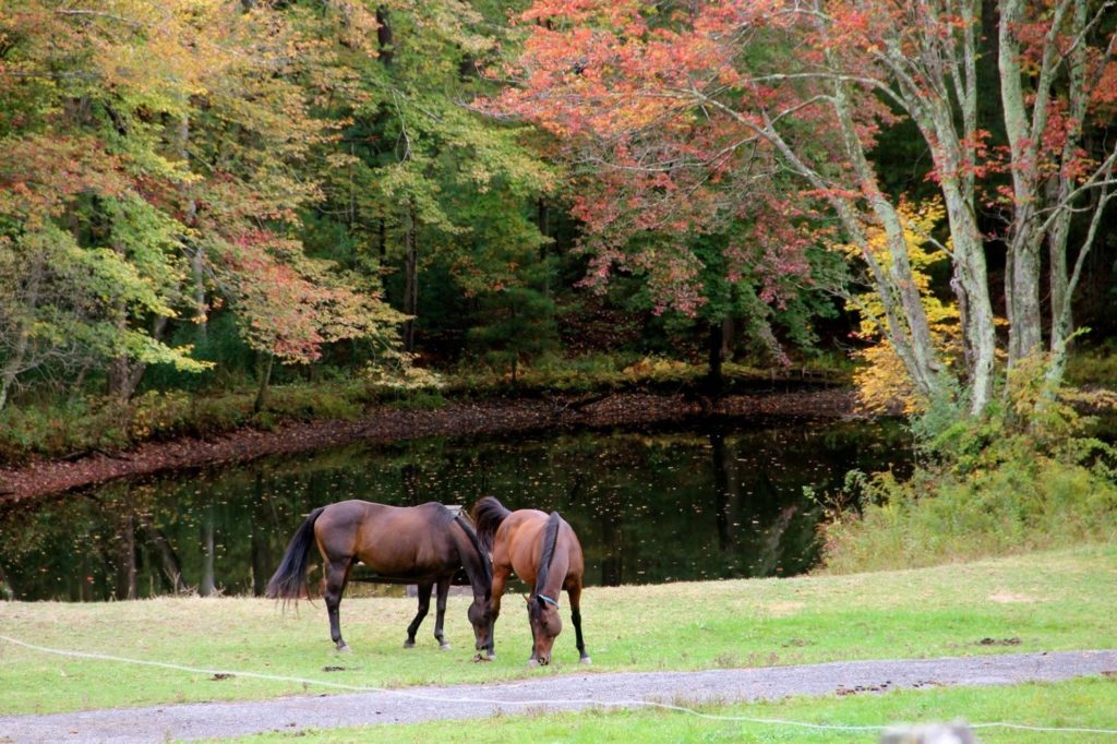 Two horses in front of pond
