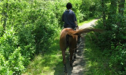 Horses on Trail Image (1)